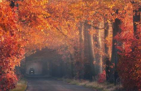 Car driving thru beautiful tress
